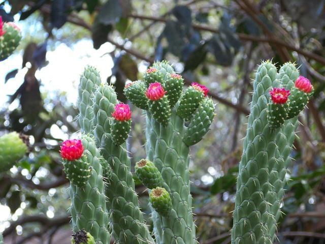 Flora Of Ecuador S Sierra Ecuador Life And Culture