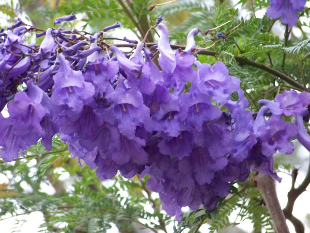 Flora of Ecuador's Sierra | Ecuador Life and Culture