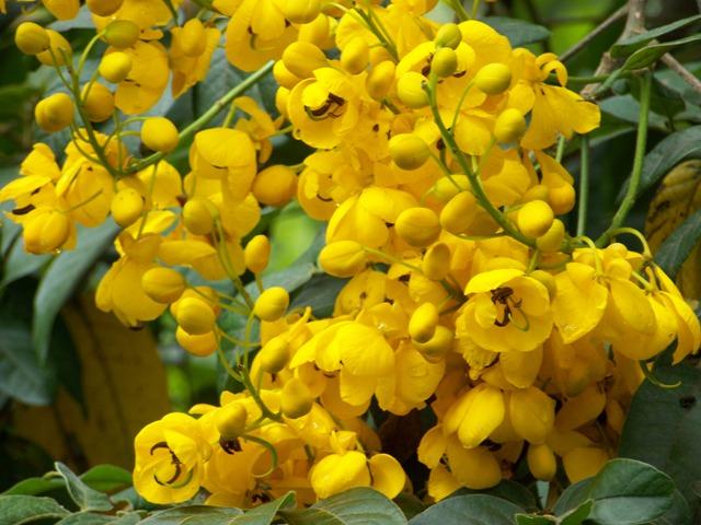 Botanic garden of quito ecuador life and culture weeping bottlebrush mightylinksfo