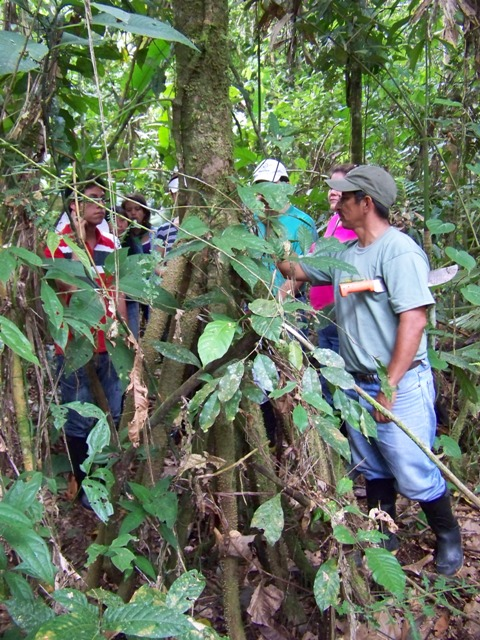 """Carlos explains the growth habit of the """"walking tree"""" in front of him."""