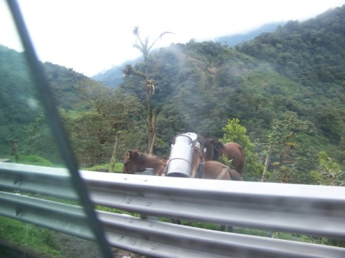 Milk is still delivered by horse or mule today in the mountains of Ecuador.